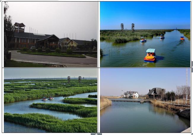 唐山曹妃甸湿地.jpg